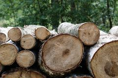 Forest cut, cut pine, birch tree logs arranged in order in cubic Royalty Free Stock Photo
