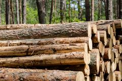 Forest cut, cut pine, birch tree logs arranged in order in cubic Royalty Free Stock Images