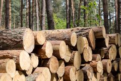 Forest cut, cut pine, birch tree logs arranged in order in cubic Stock Images