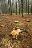 Forest cutting Stock Image
