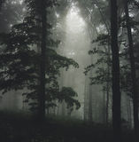Forest with dark fog Royalty Free Stock Images