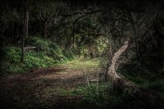 Forest dark gloomy and scary painting. Forest path dark and gloomy looks like a painting. High contrast dramatic lighting. Dead trees royalty free stock photos