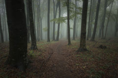 Forest with dark green fog stock images