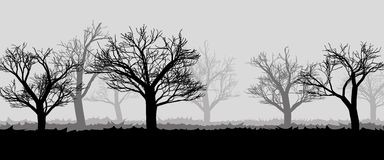 Forest in the dark mist, trees silhouettes Royalty Free Stock Photos