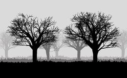 Forest in the dark mist, trees silhouettes Stock Photo