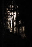 Forest darkness Royalty Free Stock Photography