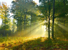 Forest dawn Royalty Free Stock Photos