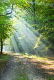Forest dawn Royalty Free Stock Images