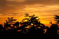Forest At Dawn Or Sunrise. Tree at Sunset with red sky Royalty Free Stock Images