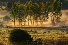 Forest at dawn, trees in fog. Sun shining and making fog glowing royalty free stock image