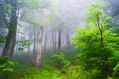 Forest day summer Royalty Free Stock Photography