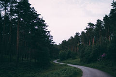 Forest during Daylight Royalty Free Stock Photos