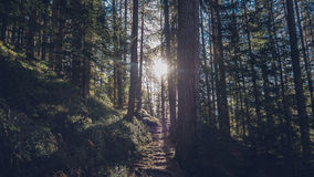 Forest during Daytime Royalty Free Stock Photo
