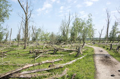 Forest with dead and fallen trees Stock Photos