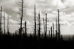 Forest of dead trees Royalty Free Stock Image