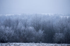 Forest. December,wood winter, rural farm Royalty Free Stock Photo