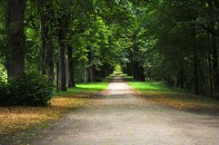 Forest with deciduous trees. Walkway in a deciduous forest in france at summer stock images