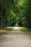 Forest with deciduous trees. Walkway in a deciduous forest in france at summer royalty free stock photo