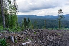 Forest decline in Black Forest Germany royalty free stock images