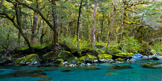 Forest and deep blue river. On routeburn track, mt. aspring national park, new zealand Royalty Free Stock Photos