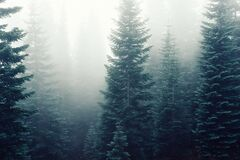 Forest Deep in Fog Royalty Free Stock Photos