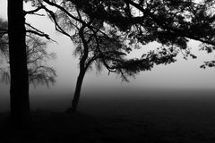 Forest in deep fog with two trees in the front Royalty Free Stock Photo