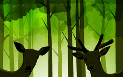 Forest deers Stock Image