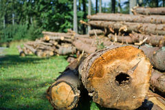 Forest deforestation Royalty Free Stock Image