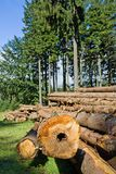 Forest deforestation Stock Photography
