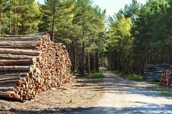 Forest, deforestation, felling, cutting, ecology, destroy, cut, fell trees Royalty Free Stock Photos