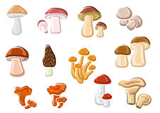 Forest delicacy edible mushrooms set. With orange chanterelle, brown cap, birch, pine and king boletes, champignon, black morel, porcini and honey agaric. For Stock Photos