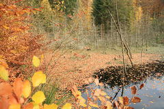 Forest in denmark Stock Photography