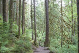 Forest path mountain trail Royalty Free Stock Photos