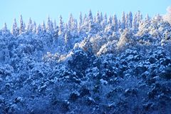 Forest and Deodar Trees on Himalayan Mountains covered by Snow with Sunlight on Top against Blue Sky stock photo