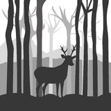 Forest design, vector illustration. Stock Photography