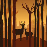 Forest design, vector illustration. Stock Photos