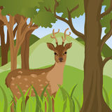 Forest design, vector illustration. Royalty Free Stock Photos