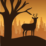 Forest design, vector illustration. Royalty Free Stock Photography