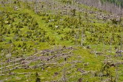 Forest destroyed by bark beetle and hurricane Stock Photography