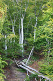 Forest destroyed by storm Royalty Free Stock Photography