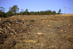 Forest Destruction. Deforestation scene, whats left after the trees have been cut down Royalty Free Stock Photo