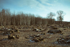 Forest destruction. In rural landscape showing tree stumps with blue sky and clouds stock photos