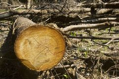 Forest Destruction Royalty Free Stock Photos