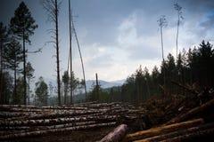 Forest destruction area Stock Images