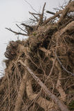 Forest Destruction stock photography