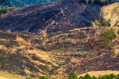 Forest destruction on the mountain Royalty Free Stock Photo