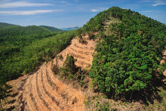 forest destruction in thailand form Aerial view Royalty Free Stock Image