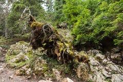 Forest Detail Royaltyfri Fotografi