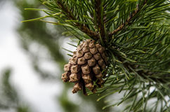 Forest Detail fotografia stock