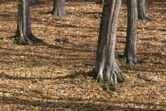 Forest detail in Autumn Royalty Free Stock Photography